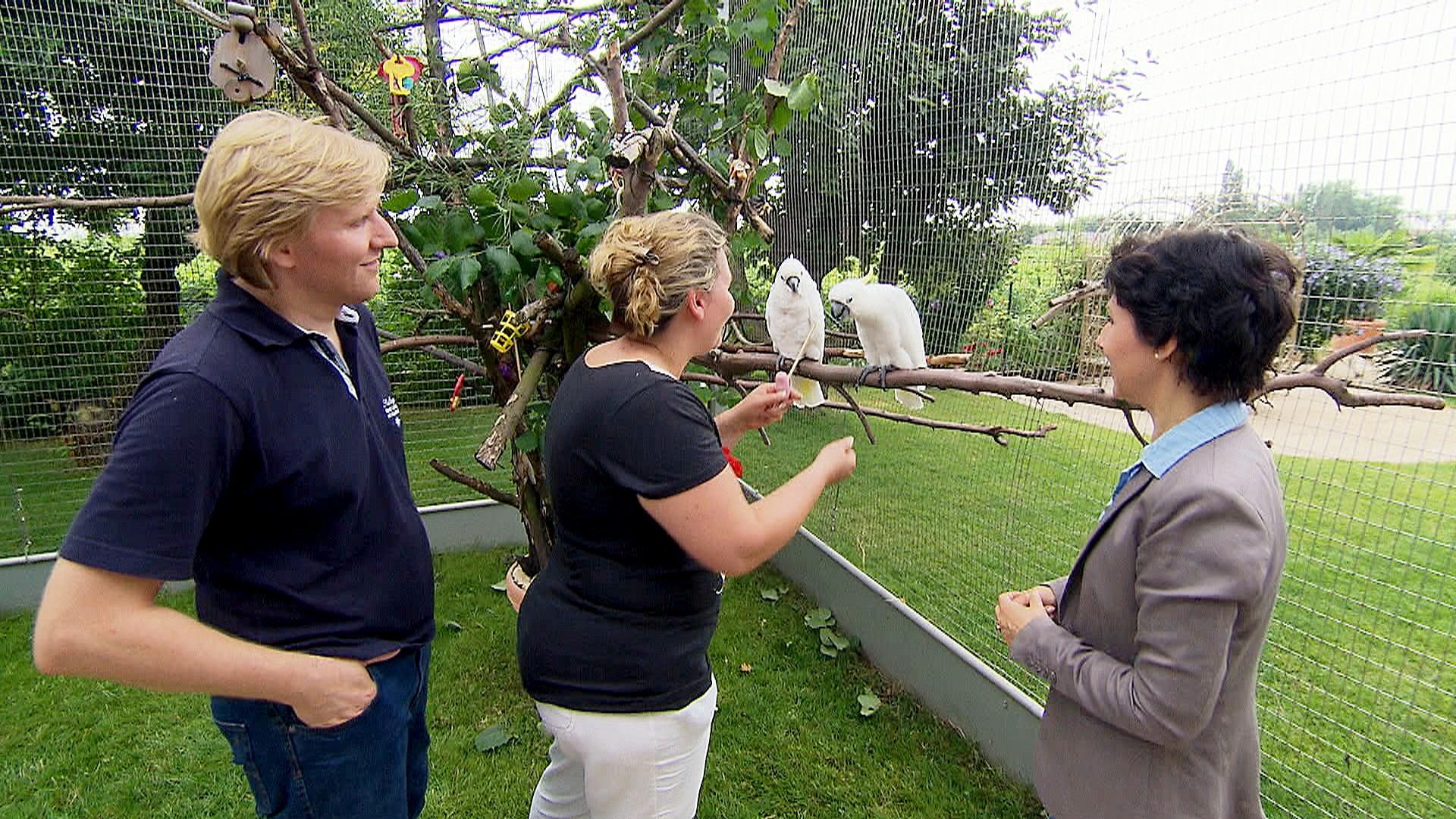 3 Engel für Tiere: Sittichexpertin Ann Castro