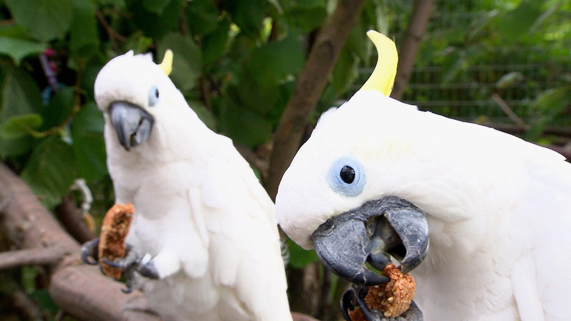 3 Engel für Tiere