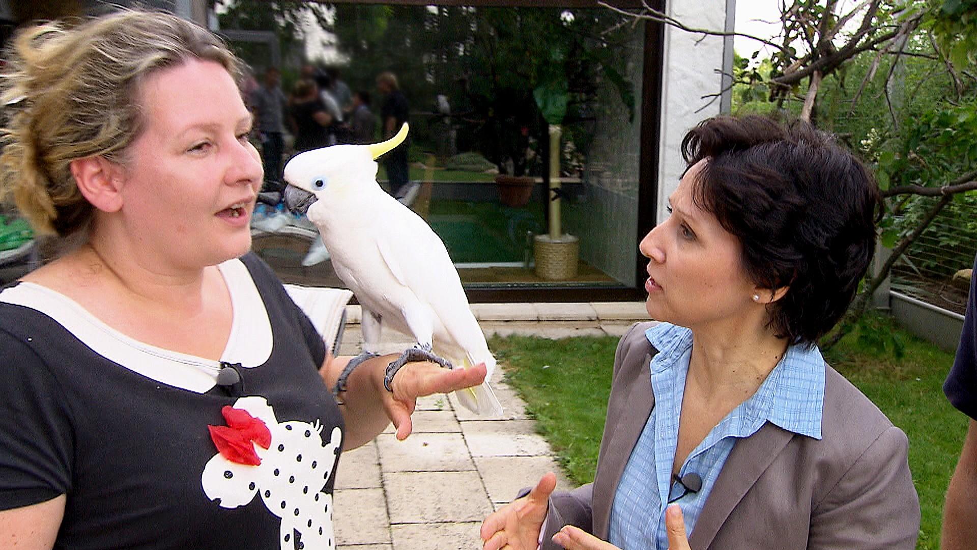 3 Engel für Tiere: Papageien- und Sittichexpertin Ann Castro