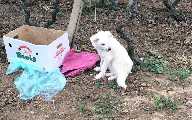 HundKatzeMaus: Straßenhunde