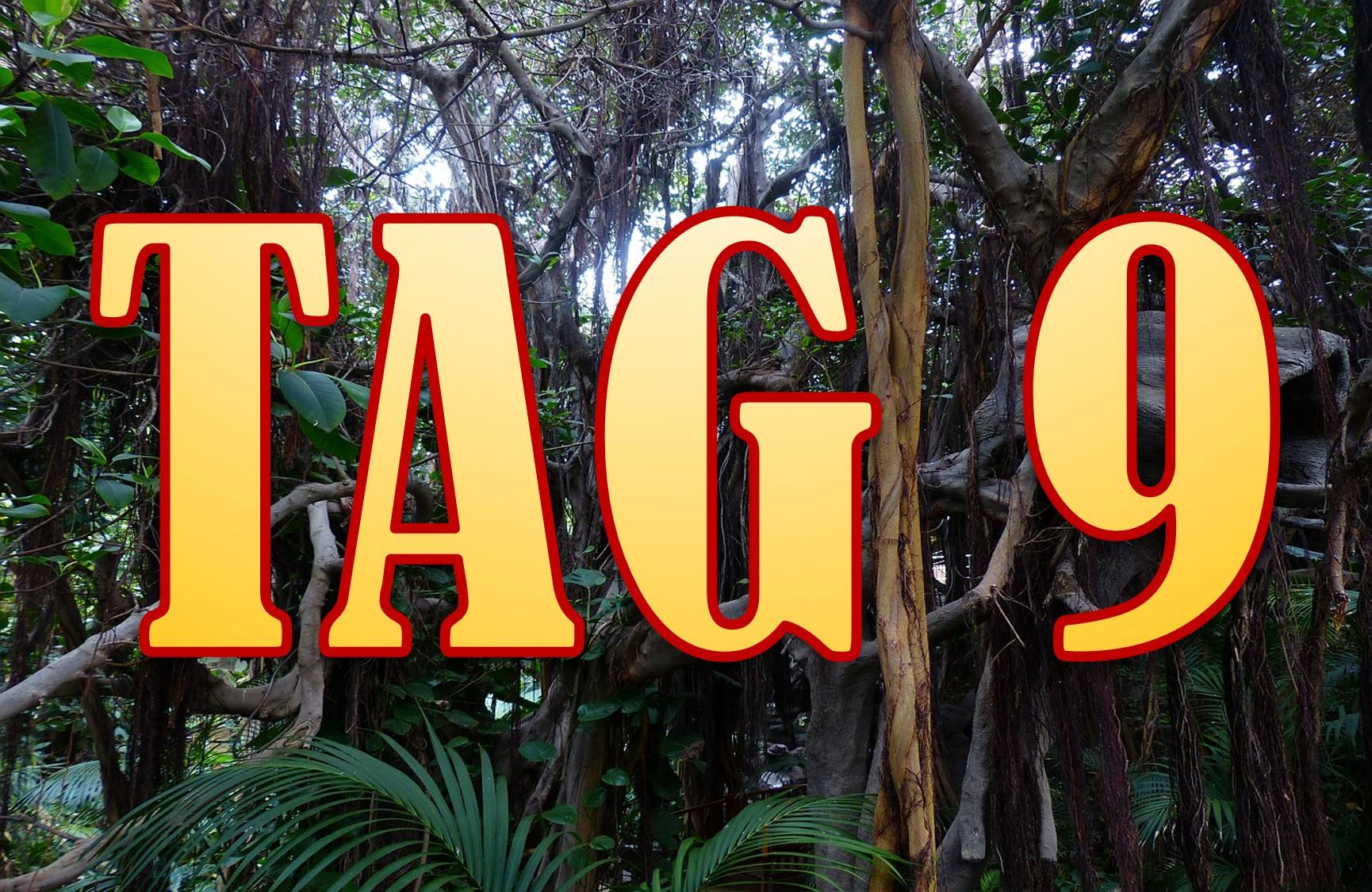 IBES 2015 Dschungelcamp 2015 Folge 9 Tag 9 24.01.2015
