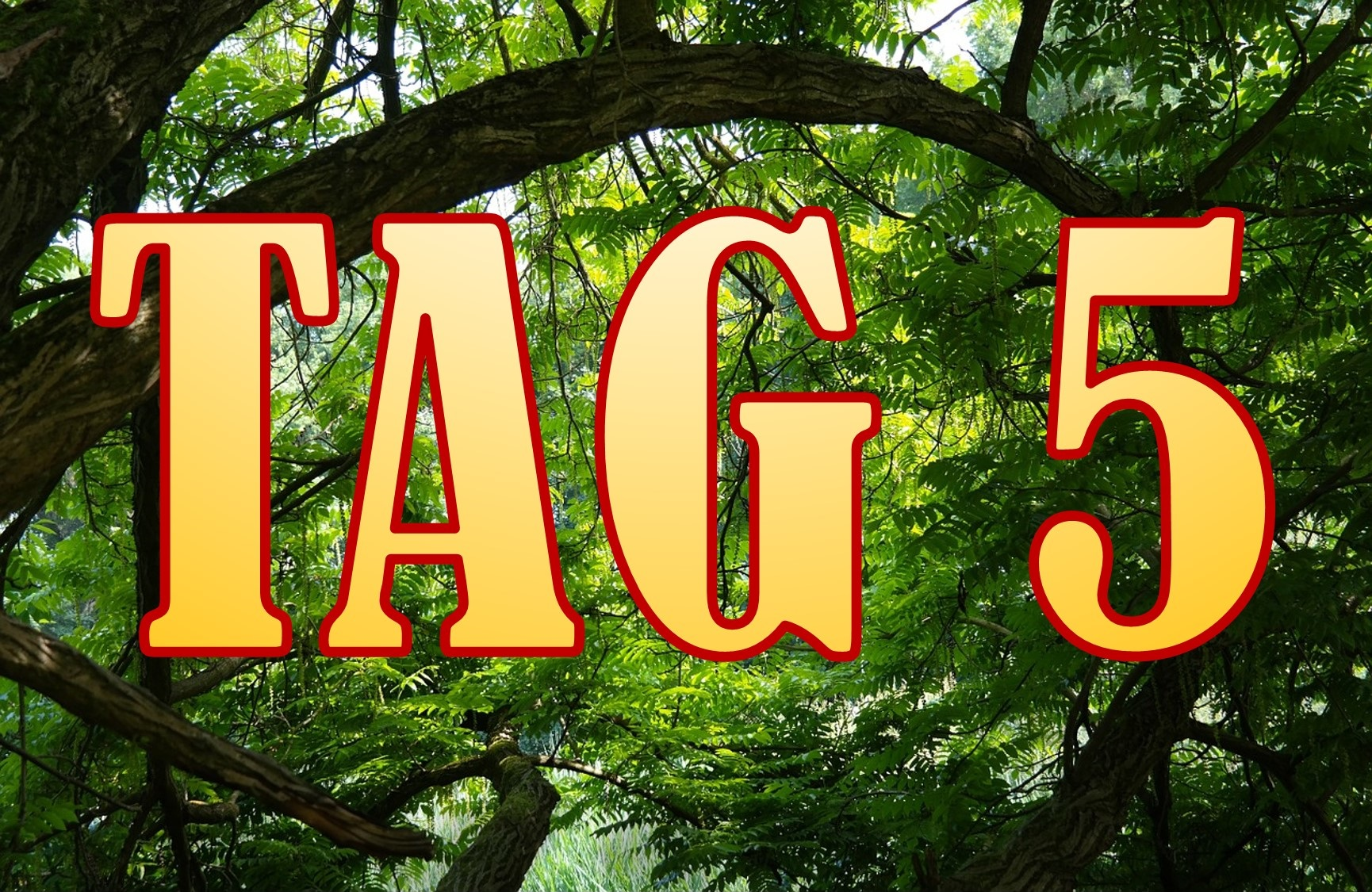 Dschungelcamp 2016 Tag 5