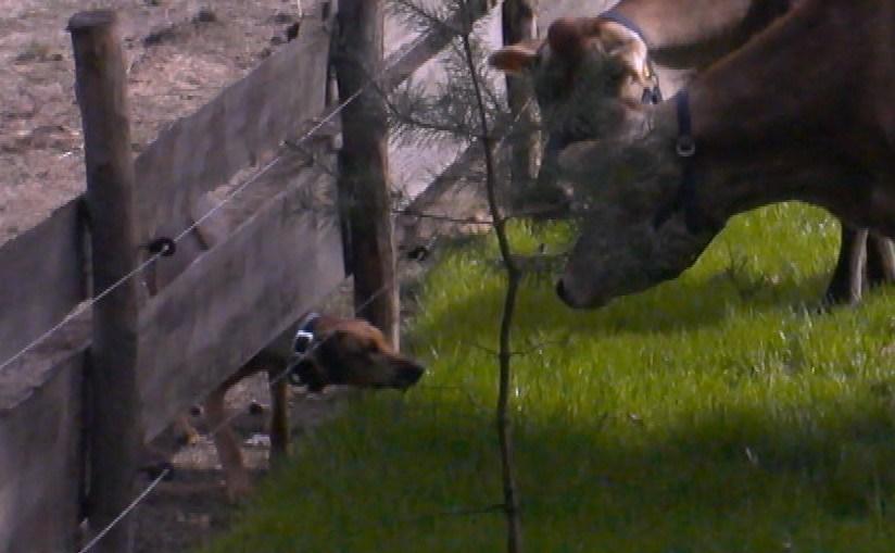 Hat auch mit den Kühen Spaß: Paula (Bild: SAT.1/Talpa)