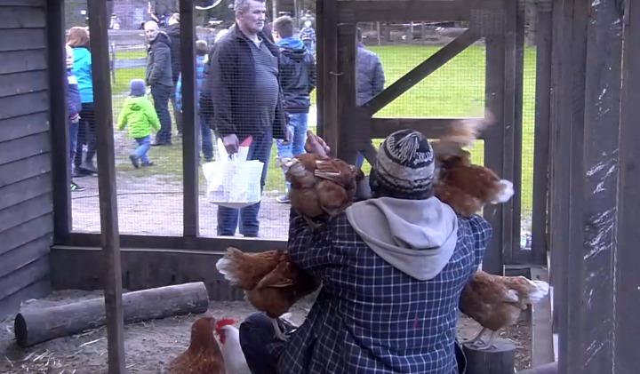 Hühner-Vati - Screenshot Sat.1