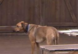Newtopia Hund Paula