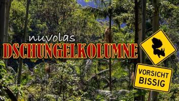 Dschungelcamp 2019 Kolumne